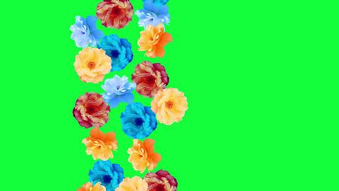 Beautiful roses flowers animation, removable background using chroma key Animation