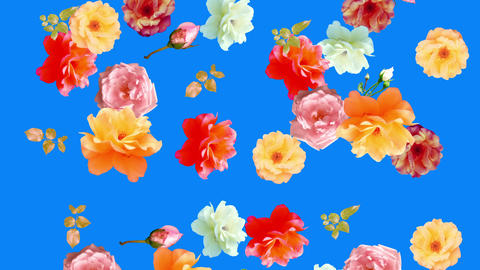 Beautiful roses flowers animation, removable background using chroma key, seamless loop CG動画