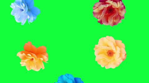 Beautiful roses flowers animation, removable background using chroma key, seamless loop Animation