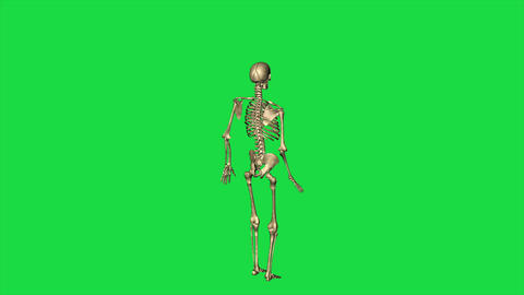 3d animation of skeleton accident fall down - separate on green screen Animation