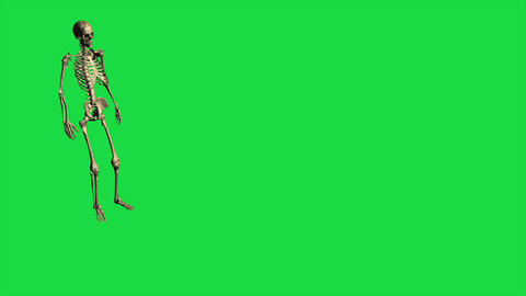 3d animation of skeleton throw grenade - separate on green screen Animation