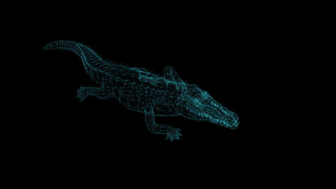 wire frame animation of crocodile attack on black background Animation