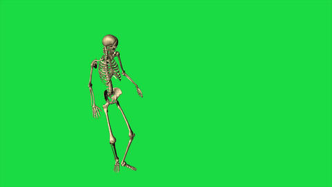 Skeleton Accident Fall Down - Separate On Green Screen Animation