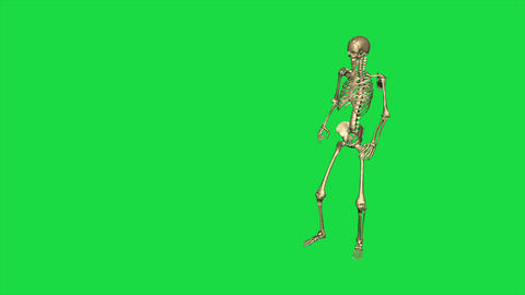 Skeleton Give Command And German Salute - Separate On Green Screen Animation