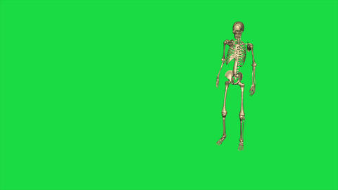 Skeleton Kneel And German Salute - Separate On Green Screen Animation