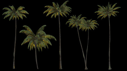 3d rendering palm trees on transparent background. Mov codec png with alpha channel GIF