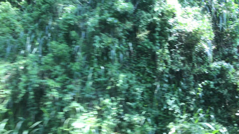 Ella, Sri Lanka, forest in the course of movement Live Action