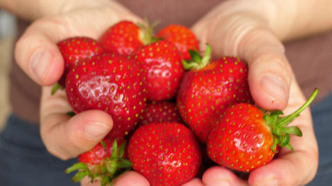 hands holding handfuls strawberry strawberries showing closing to camera Live Action