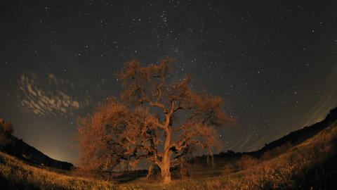 Night time lapse of star trails, clouds and Valley Oak Tree during a new moon in Oak View, Californi Footage