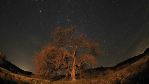 Night time lapse of star trails, clouds and Valley Oak... Stock Video Footage