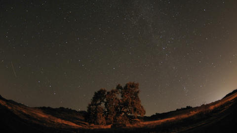 Wide night time lapse of star trails and Valley Oak Tree... Stock Video Footage