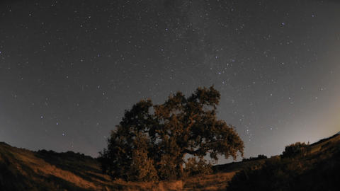 Night time lapse of star trails and Valley Oak Tree... Stock Video Footage