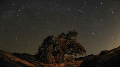 Night time lapse of star trails and Valley Oak Tree during a new moon in Oak View, California Footage