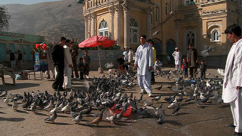 Pigeons fly in front of the Shah-e Do Shamshera Mosque in Kabul, Afghanistan Footage