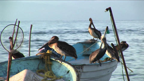 Six pelicans stand on two rowboats floating in the water Footage