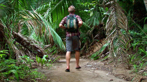 A man hikes on a trail into a tropical forest Footage