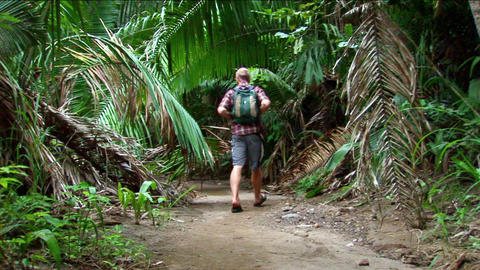 A man hikes on a trail into a tropical forest Stock Video Footage