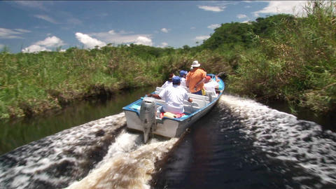 A tourist motorboat travels through a wetland river area Footage