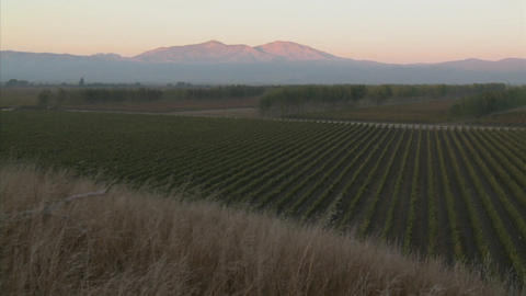 A slow pan across a vineyard in Monterey County, California Footage