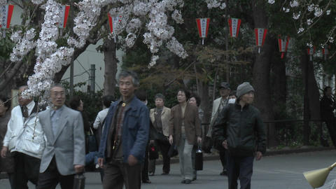 A vertical pan in Ueno Park during the cherry blossom... Stock Video Footage