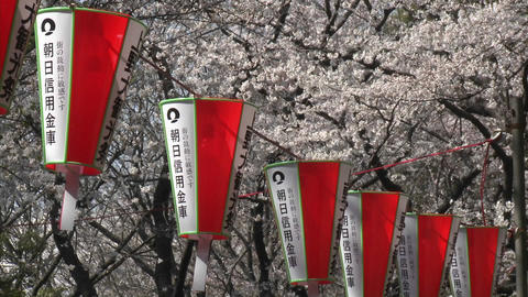 Lanterns in Ueno Park during the cherry blossom season in... Stock Video Footage