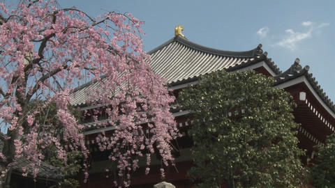 Cherry blossoms on a warm spring day at the Senso-ji Temple complex in Asakusa, Tokyo, Japan Footage