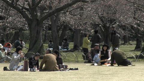 A picnic in Koraku-en park during sakura, or cherry... Stock Video Footage