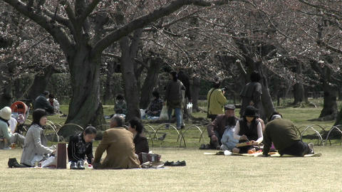 A picnic in Koraku-en park during sakura, or cherry... Stock Video Footage