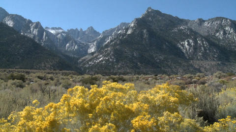 Horizontal pan over wild flowers in the Alabama Hills and the Sierra Nevada Range above Lone Pine, C Footage