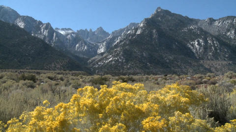 Horizontal pan over wild flowers in the Alabama Hills and... Stock Video Footage