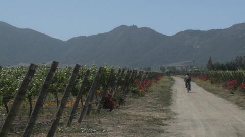 Pan across a vineyard in the Casablanca Valley near... Stock Video Footage