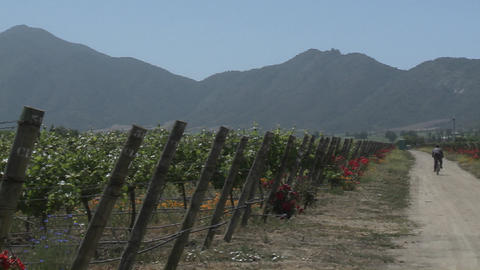 Pan across a vineyard in the Casablanca Valley near Valparaiso, Chile Footage