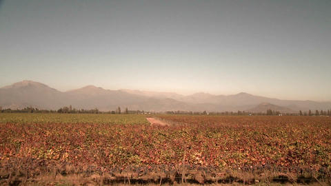 View from a train of the Central Valley wine country... Stock Video Footage