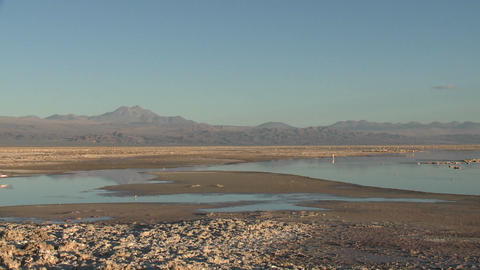 Pan across the flamingo habitat of Laguna Chaxa at the Salar de Atacama in the Reserva Nacional Los Footage