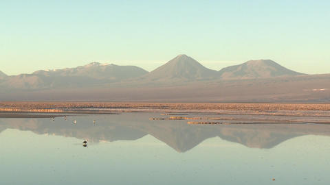 Time lapse of birds feeding in the brine of Laguna Chaxa... Stock Video Footage
