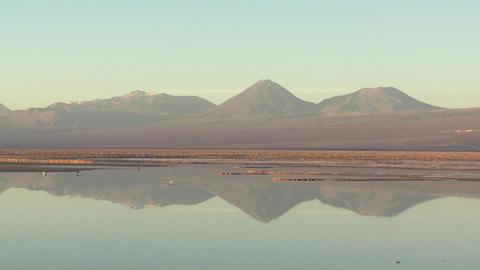 Time lapse of birds feeding in the brine of Laguna Chaxa... Stock Video Footage