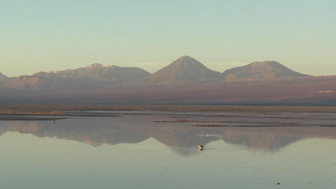 Time lapse of birds feeding in the brine of Laguna Chaxa at the Salar de Atacama in the Reserva Naci Footage