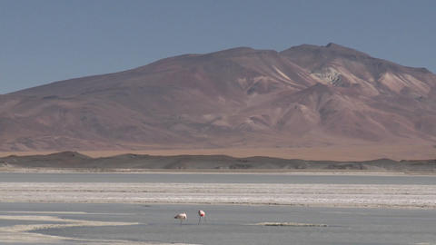Flamingos in the Salar de Laco in the altiplano high... Stock Video Footage