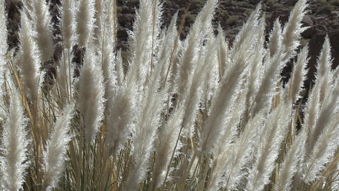 Desert grasses blow in the breeze in the Termas de... Stock Video Footage