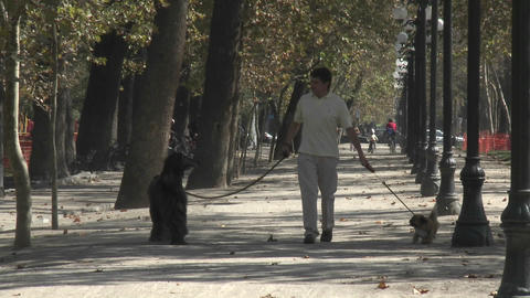 A man walks two dogs in the Parque Forestal in Santiago,... Stock Video Footage