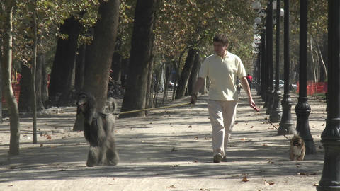 A man walks two dogs in the Parque Forestal in Santiago, Chile Footage