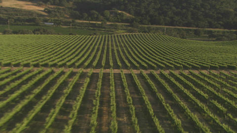 Helicopter low level aerial of Santa Barbara County vineyards, California Footage