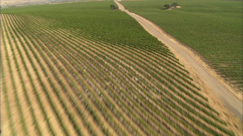 Helicopter low level aerial of Monterey County vineyards, California Footage