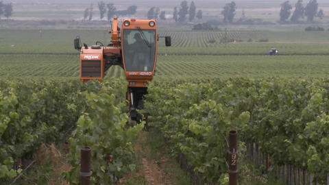 Time lapse of mechanized pruning in a Monterey County... Stock Video Footage