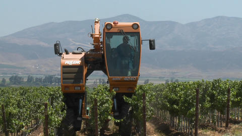 Time lapse of mechanized tilling in a Monterey County vineyard, California Footage