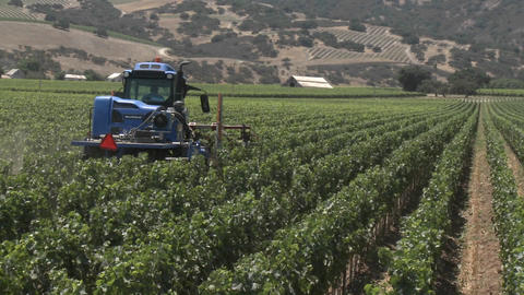 Machine pruning a Monterey County vineyard, California Footage