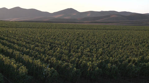 Pan across a vineyard in the Salinas Valley wine country,... Stock Video Footage