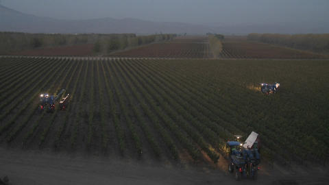 Time lapse of automated night picking in a vineyard in... Stock Video Footage