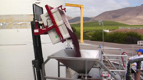 A forklift delivers crushed grapes to a bladder press for added juice extraction Footage