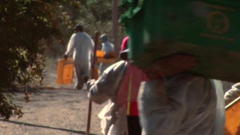 Harvest workers with empty bins move to a different row... Stock Video Footage